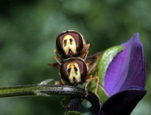 pollinators-1024px